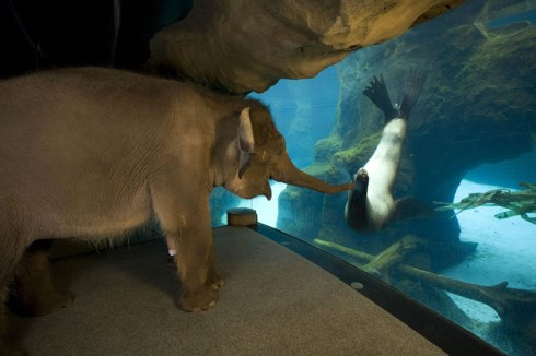 An Elephant meets a Sea Lion at the Oregon Zoo