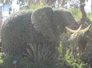 An Elephant Plant!!