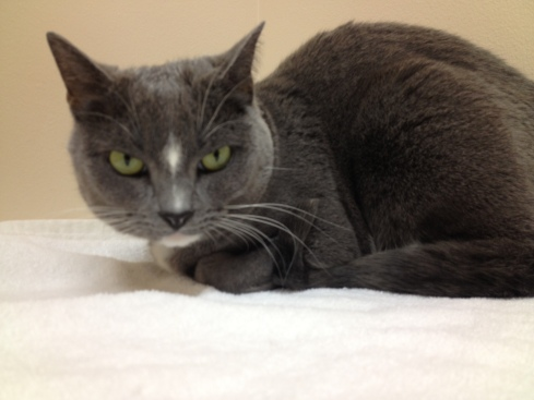 """This is Hemi's """"Go to hell"""" look that she gives the vet...some say that she gets that look from me..."""