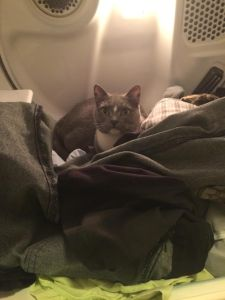 Hemi likes a warm dryer full of fresh clothes.  Good thing cat hair goes well with every outfit...