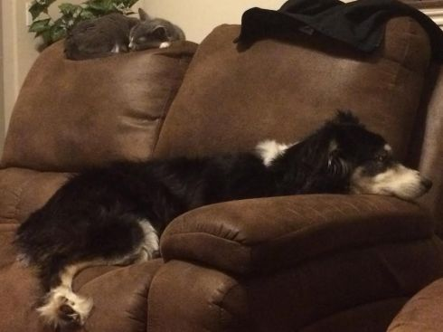 Both of our babies sleeping on the couch together...